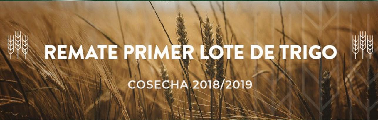Primer Lote de Trigo 2018/2019