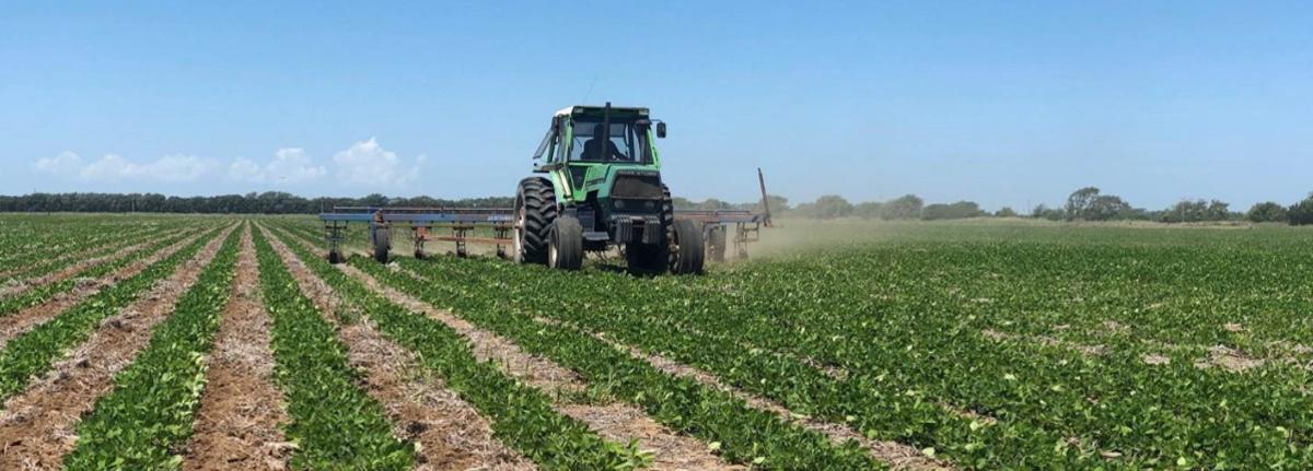 Argentine Peanut Crop Report – Special Edition