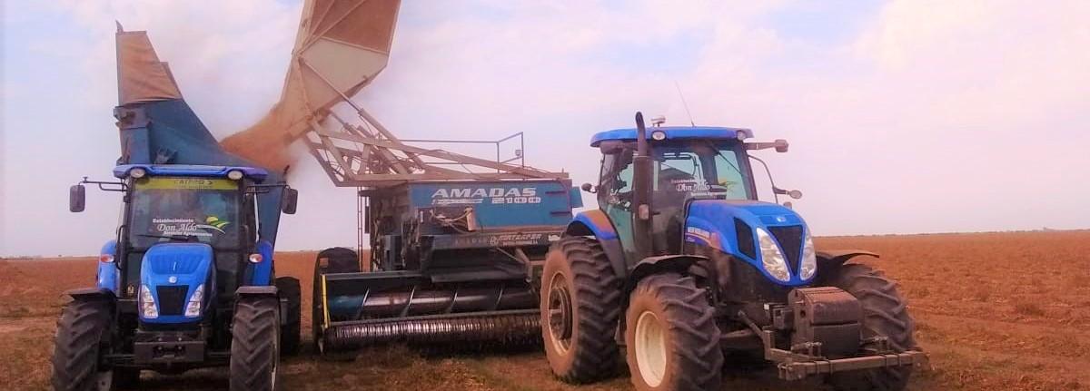 Argentine Peanut Crop Report 2019/2020 #5