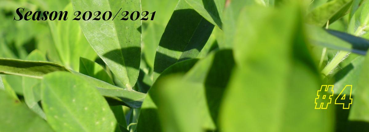 Argentine Peanut Crop Report 2020/2021 #4